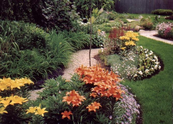 Лилии в ландшафтном дизайне
